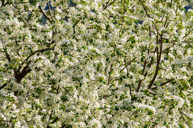 Rest place with apple tree in full blossom royalty free stock photo