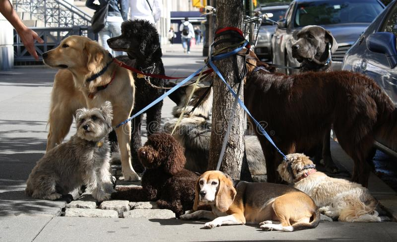 Rest van dogsitter stock afbeelding