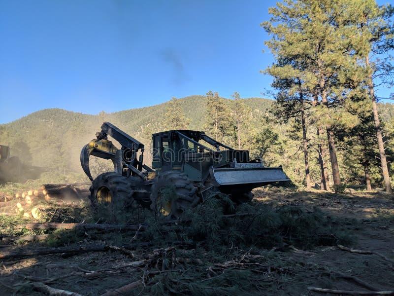 Restauração da floresta imagem de stock royalty free