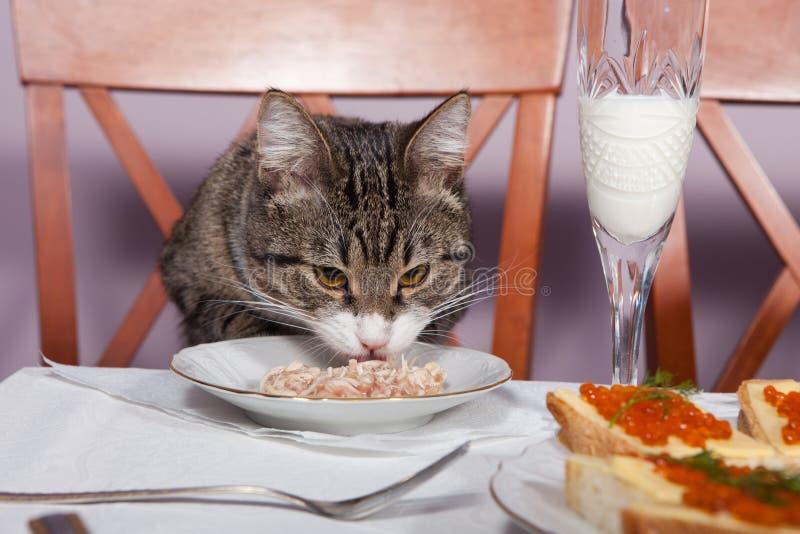 Restaurante para o gato fotografia de stock royalty free