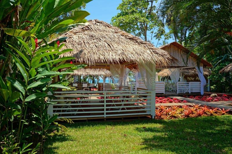Restaurante tropical com plantas coloridas foto de stock royalty free