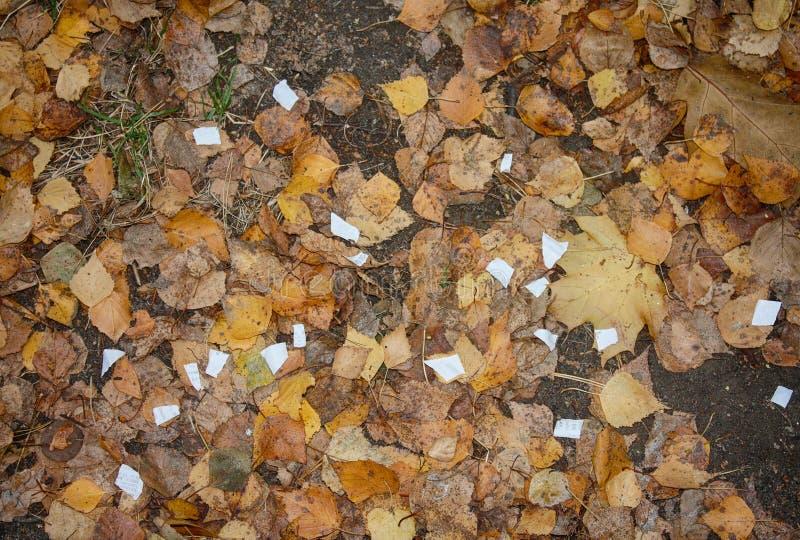 Rester av papper och våta stupade sidor royaltyfri bild