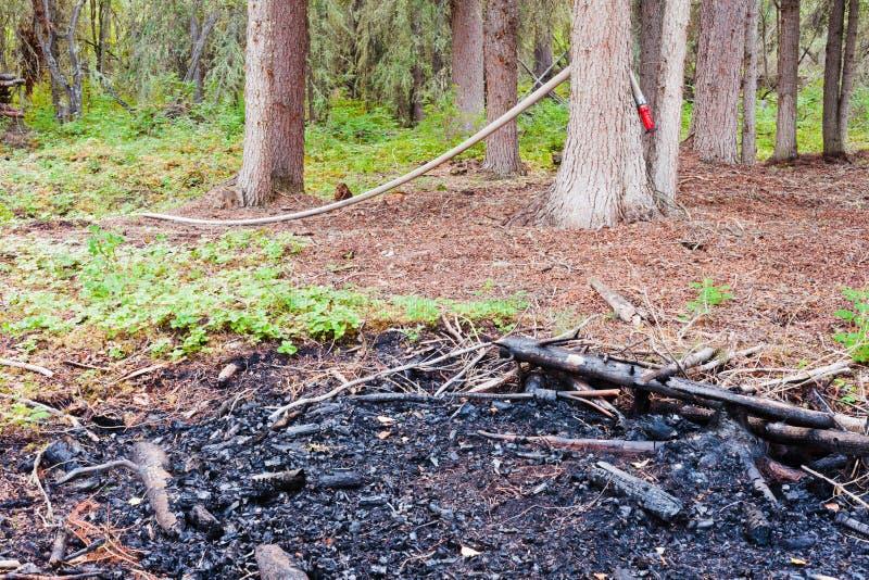 Restes d'incendie de forêt éteints juste à temps images libres de droits