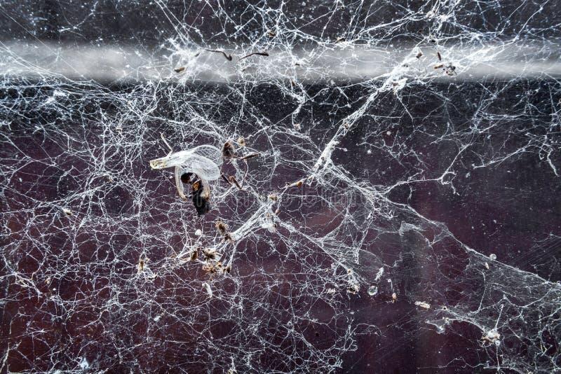 Restez des insectes attrapés dans la toile d'araignée dans le vieux garage photo stock