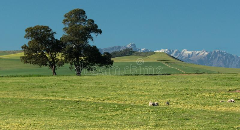 Restful, green field with snow on mountain tops stock photo