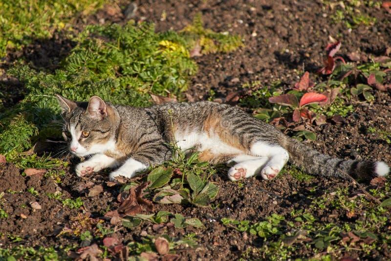 Resti del gatto nel campo immagini stock libere da diritti