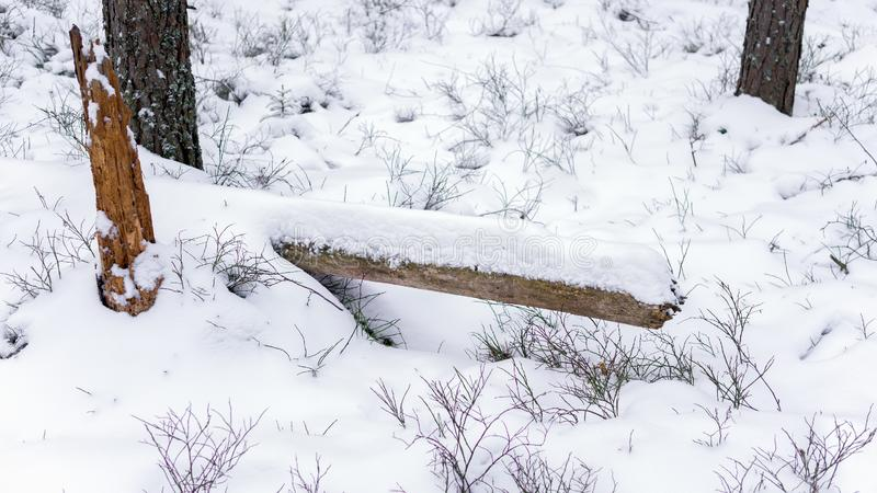 Resti di un tronco di albero caduto coperto di neve in una foresta di inverno fotografia stock