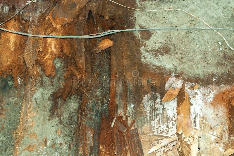Resti dopo il pavimento di legno marcio ed il calcestruzzo dell'inondazione devastante con i cavi rotti dentro la casa immagine stock libera da diritti