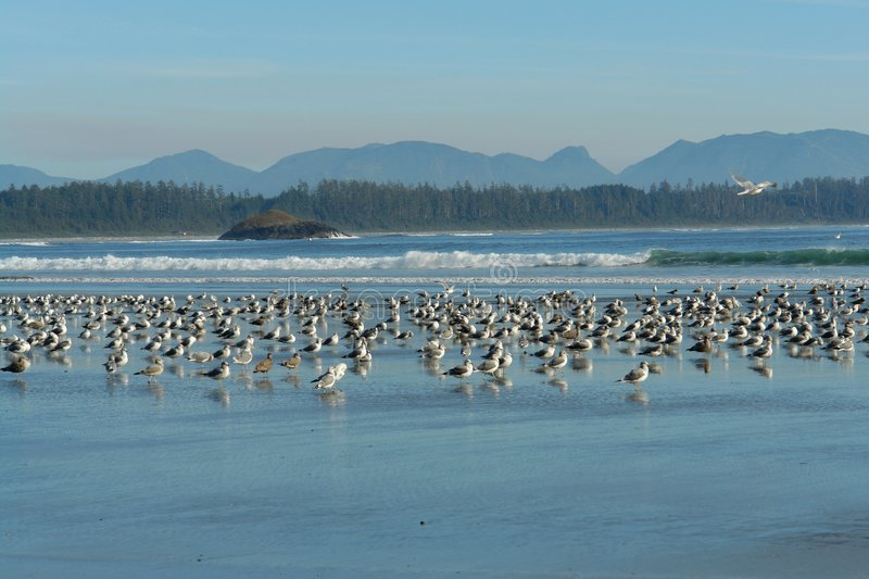 Download Resting birds stock image. Image of view, waves, seaside - 4397815
