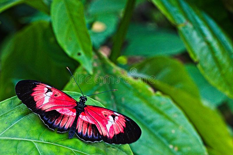 Resting butterfly on green leaf stock image