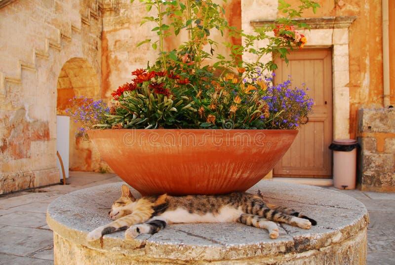 Download Resting cat stock photo. Image of looking, garden, lying - 24051080