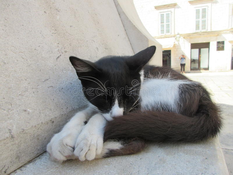 Resting cat. A black and white cat resting in the warm Croatian afternoon heat. A pretty fella with big paws. Photo taken in Dubrovnik stock photo