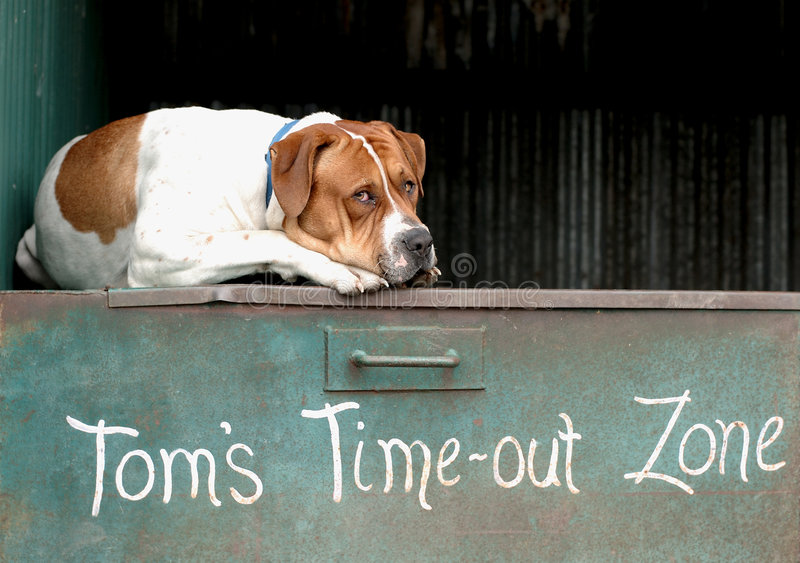 Resting Dog. A dog resting on a metal box stock image
