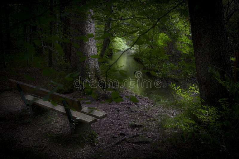 Resting place in the forest stock photo