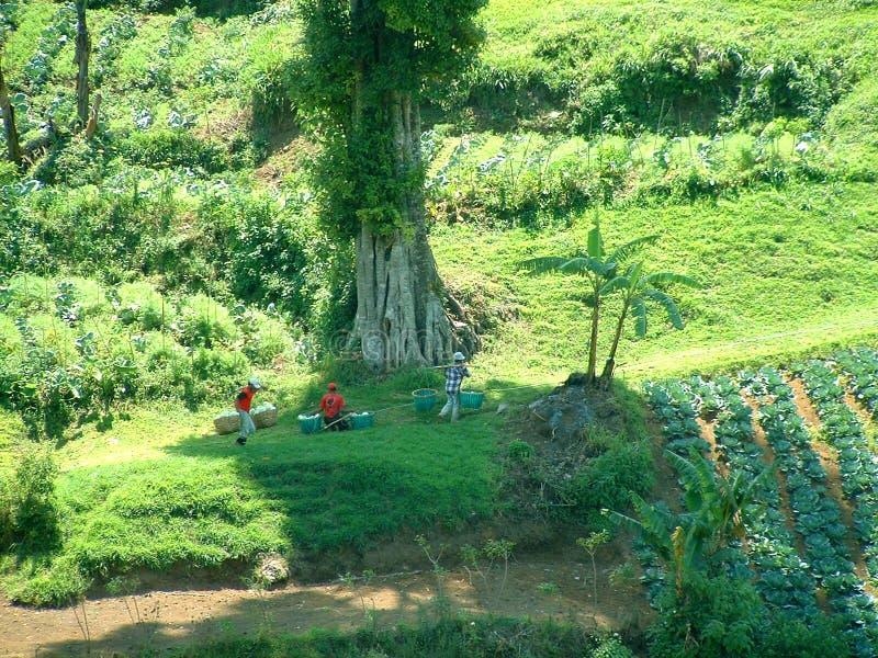 Download Restkupa fotografering för bildbyråer. Bild av tropiskt - 32675