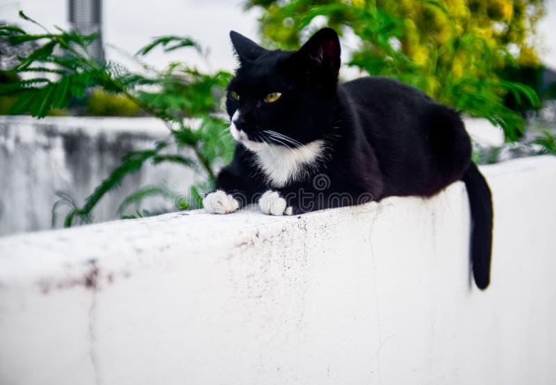 Resto del gatto sulla parete bianca con l'albero immagine stock libera da diritti