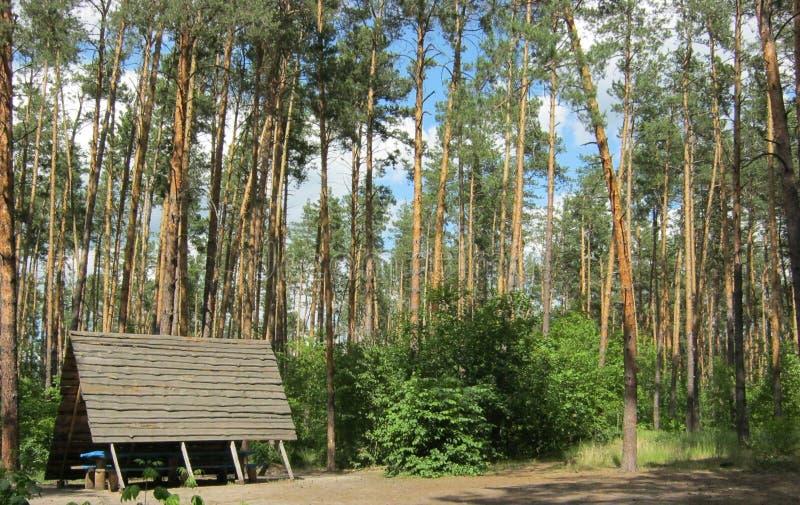 Resto em uma floresta do pinho foto de stock