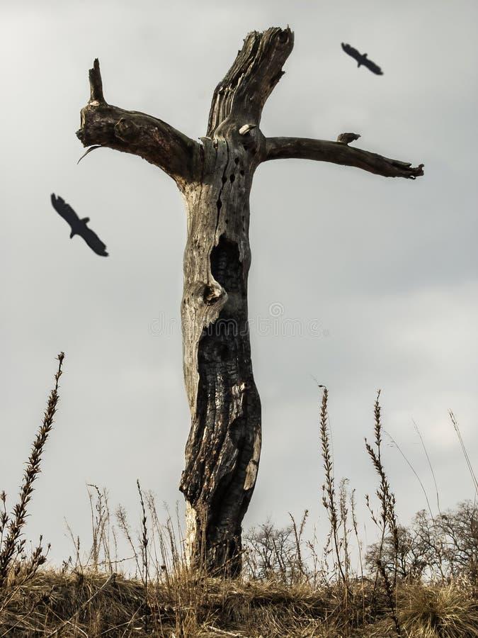 Restos de un árbol seco muerto que se coloca solamente en el campo con los pájaros que vuelan arriba fotos de archivo libres de regalías