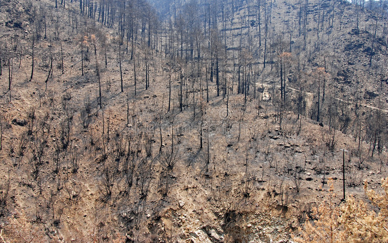 Restos de un incendio forestal imágenes de archivo libres de regalías
