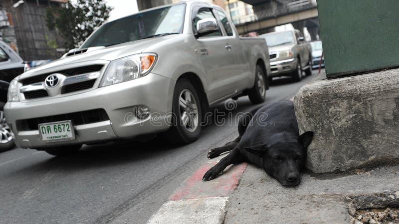 Restos del perro perdido en una calle de la ciudad fotografía de archivo libre de regalías