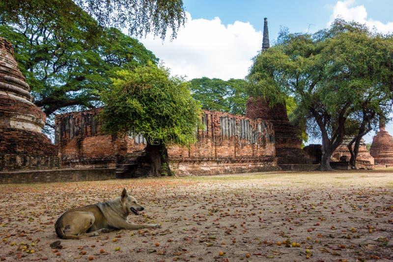 Restos do cão em ruínas do templo de Tailândia fotos de stock