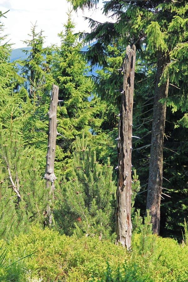 Restos dos troncos de árvores inoperantes imagem de stock