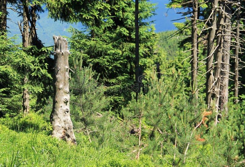 Restos dos troncos de árvores inoperantes fotos de stock royalty free