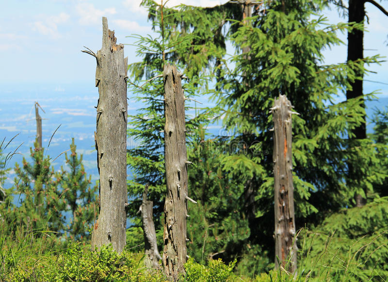 Restos dos troncos de árvores inoperantes imagens de stock royalty free