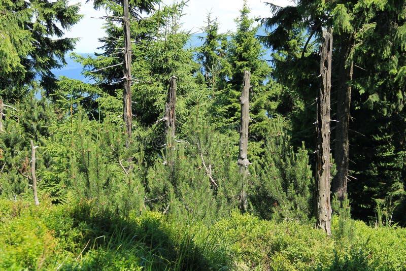 Restos dos troncos de árvores inoperantes fotografia de stock royalty free