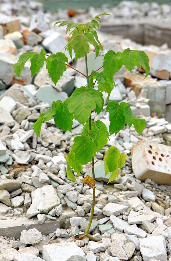 Restos e árvore nova fotos de stock royalty free