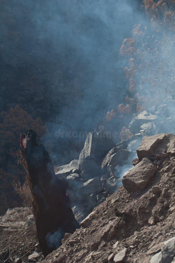 Restos quemados de pino canario Pinus canariensis exhalar humo foto de archivo