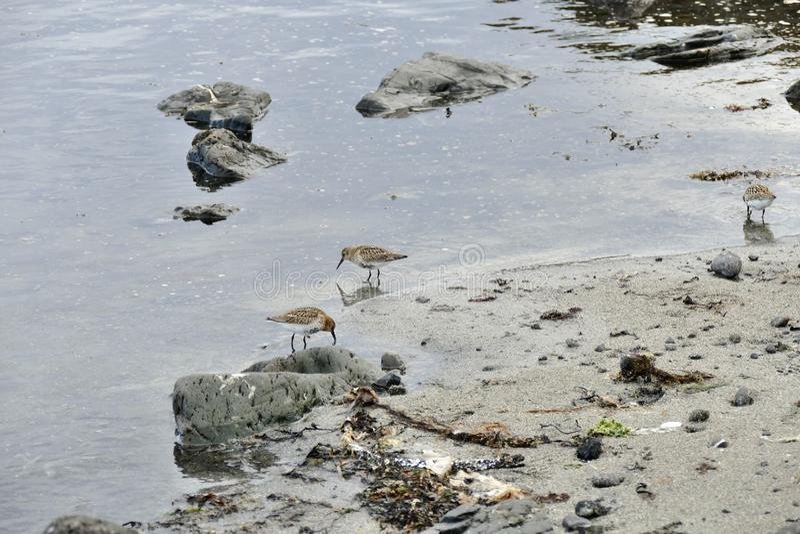 Restricciones en el agua poco profunda en una playa arenosa en la península de Snaefellsnes fotos de archivo