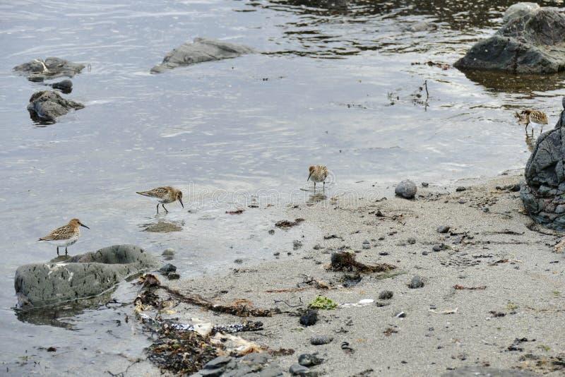 Restricciones en el agua poco profunda en una playa arenosa en la pen?nsula de Snaefellsnes imagen de archivo libre de regalías