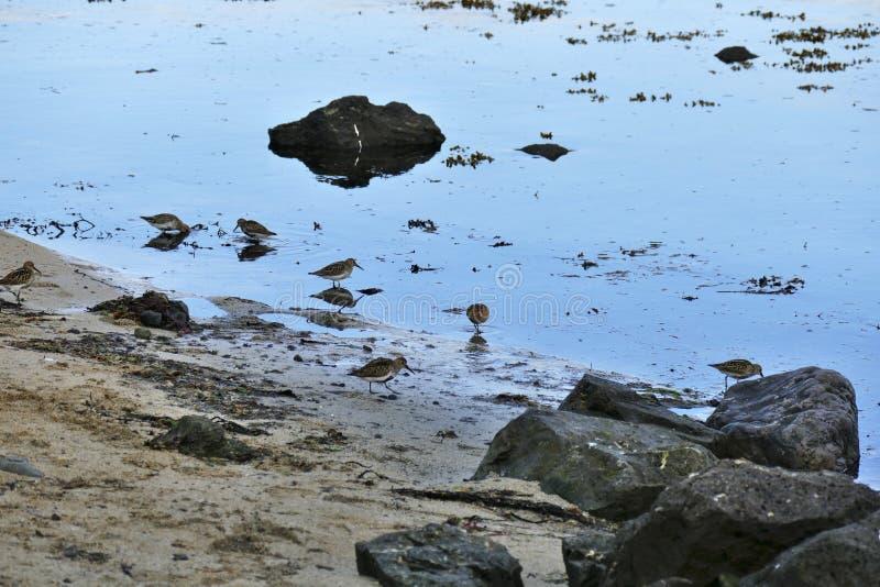 Restricciones que reflejan en el agua en una playa arenosa en la península de Snaefellsnes imagen de archivo