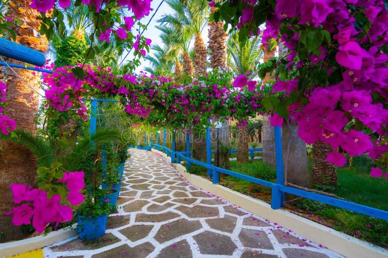 Restringa la via pavimentata in pieno dei fiori variopinti in Sisi, Creta immagini stock libere da diritti