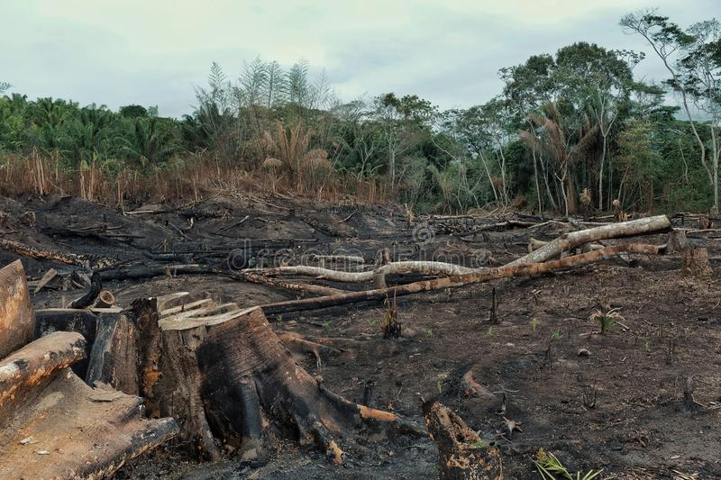 Result of the deforestation of the rainforest with burnt down fields and extensive logging. Result of deforestation of the rainforest with burnt down fields and royalty free stock photos