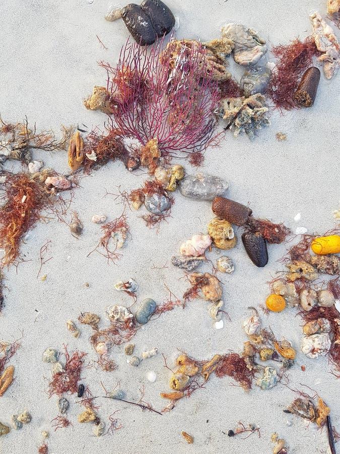 Resultados da praia: escudos e rochas do mar fotos de stock