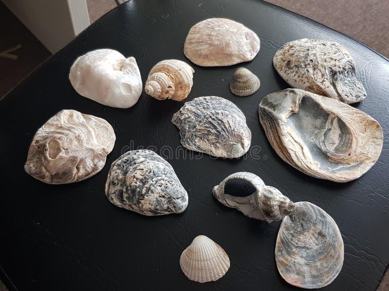 Resultados do beira-mar imagem de stock