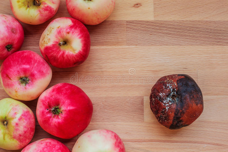 Results of the harvest. Rotten and fresh apples on a wooden table royalty free stock photo
