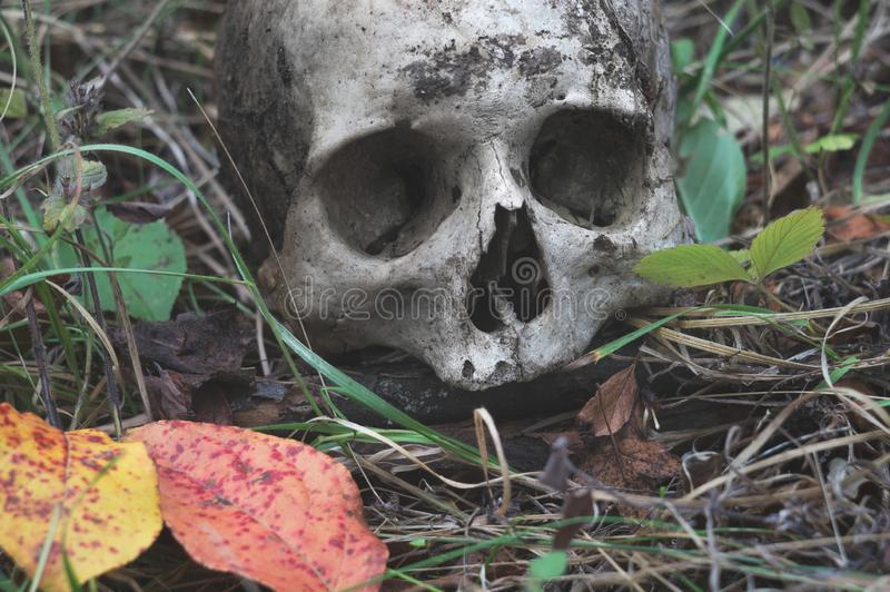Resztki średniowieczny wojownik na polu bitwy w jesieni Istna ludzka czaszka na natury trawy polu Gocki tło obraz stock