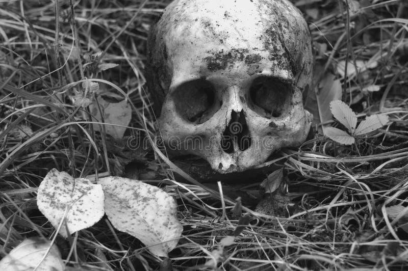 Resztki średniowieczny wojownik na polu bitwy w jesieni Istna ludzka czaszka na natury trawy polu Gocki tło zdjęcia stock