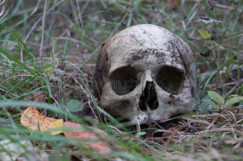 Resztki średniowieczny wojownik na polu bitwy w jesieni Istna ludzka czaszka na natury trawy polu Gocki tło zdjęcia royalty free