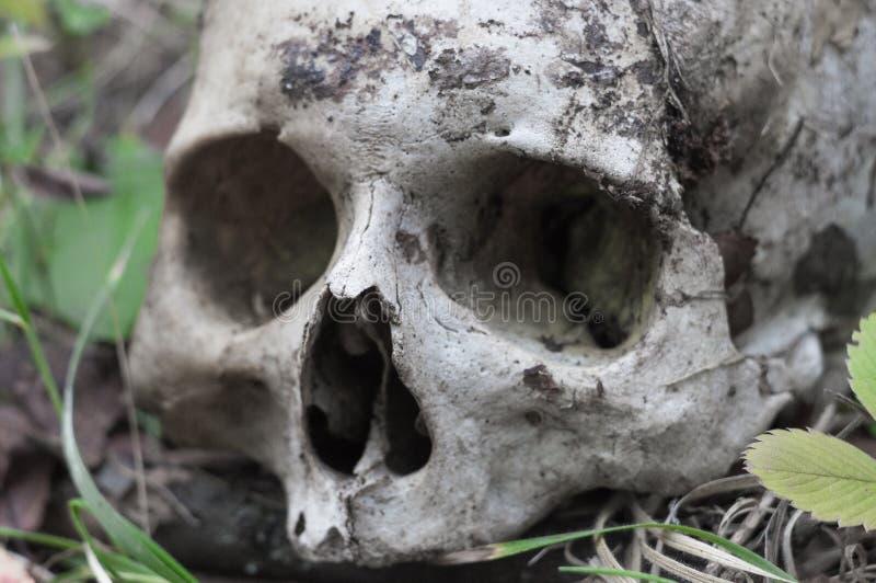 Resztki średniowieczny wojownik na polu bitwy w jesieni Istna ludzka czaszka na natury trawy polu Gocki tło obrazy royalty free