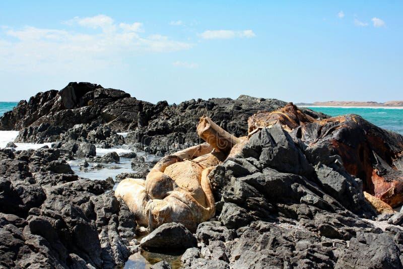 Resztki Nieżywy Whale-2: Masirah wyspa, Oman fotografia stock