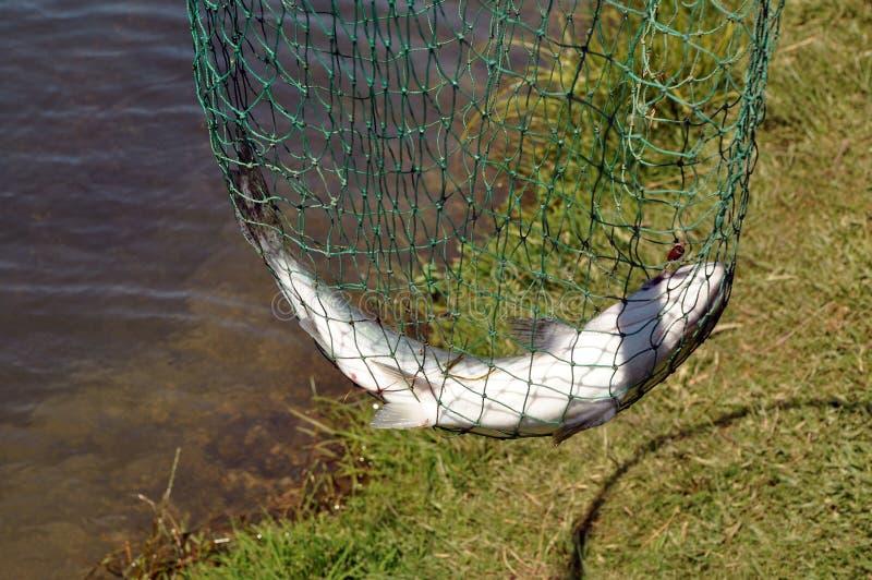 Retén de pesca fotografía de archivo libre de regalías