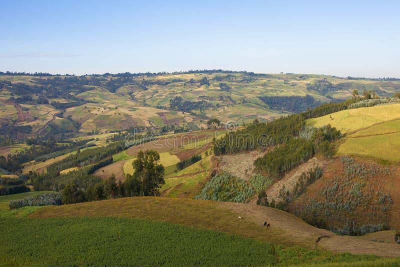 Retalhos das explorações agrícolas em Etiópia imagens de stock royalty free