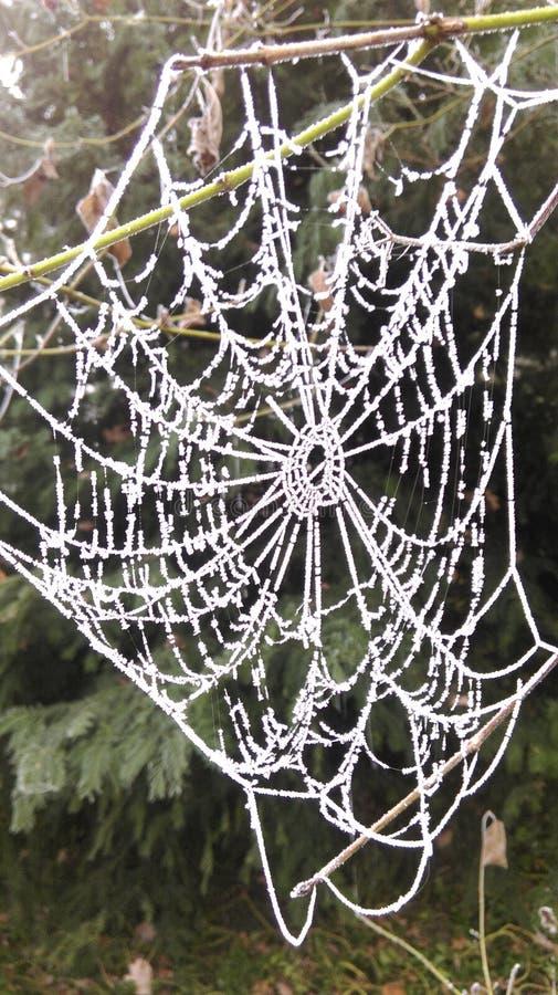 Rete congelata del ragno nell'orario invernale fotografia stock