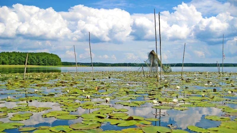 Rete da pesca nel lago Mueritz fotografia stock libera da diritti