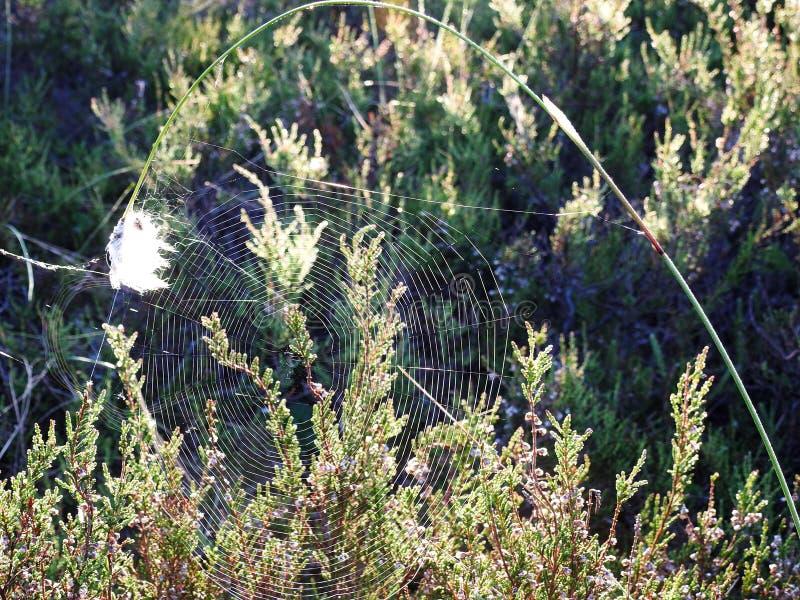 Rete del ragno con il foro, Lituania fotografie stock