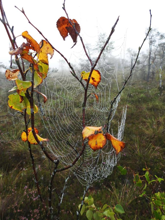 Rete del ragno con la rugiada di mattina, Lituania immagini stock